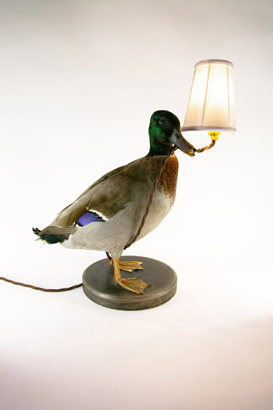 duck desk lamp, lighting design, interior design, lighting, taxidermy, upcycle